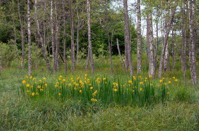 Värmlands Säby gård